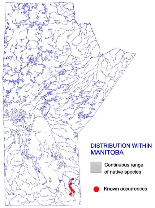 Figure 4: Distribution of the carmine shiner in Manitoba