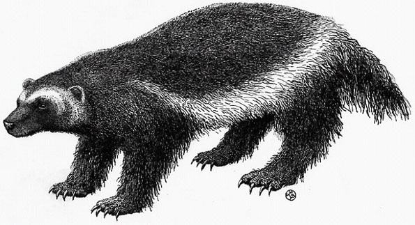 Figure 1: Illustration of Gulo gulo.