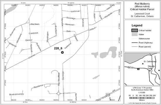 Figure 11: Location and extent of critical habitat parcel # 228_6 for Red Mulberry. Critical habitat does not include existing infrastructure, existing cultivated areas, or unnatural vegetation types, as described in Section 7.