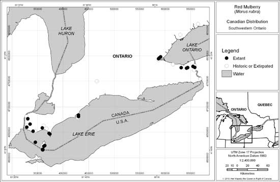 Figure 2: Canadian distribution of Red Mulberry (updated from Thompson 2002b).