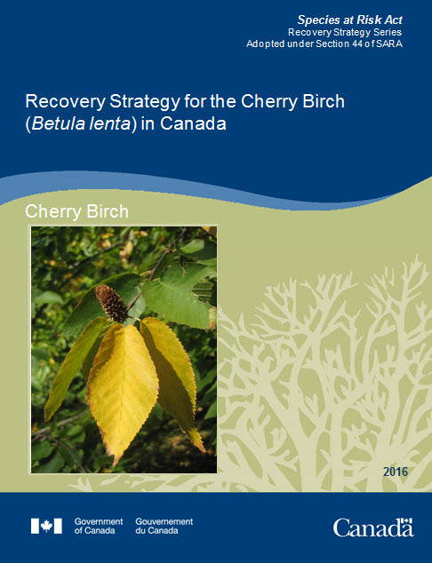 Recovery Strategy for for the Cherry Birch