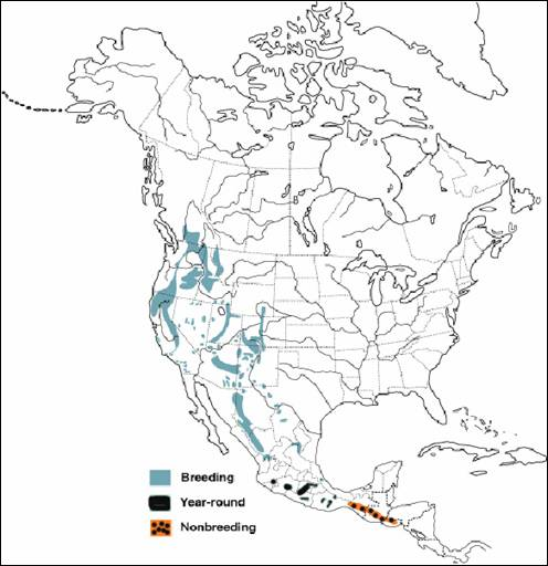 Figure 1 shows the global distribution of the Flammulated Owl. The species occurs in a patchy distribution along western North America up to northern British-Colombia. Three colours are use in this map to indicate Breeding, Year-round and Non-breeding areas.