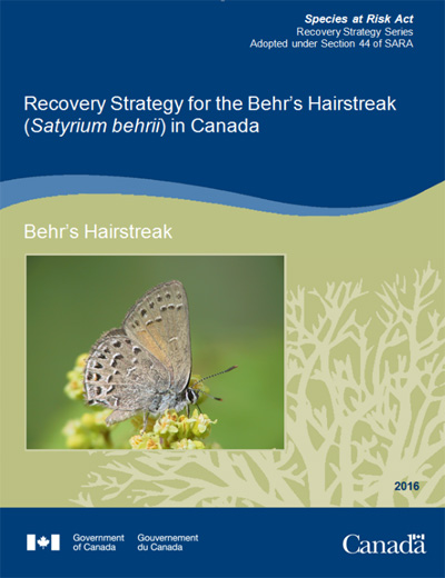 Cover Photo of Recovery Strategy for the Behr's Hairstreak