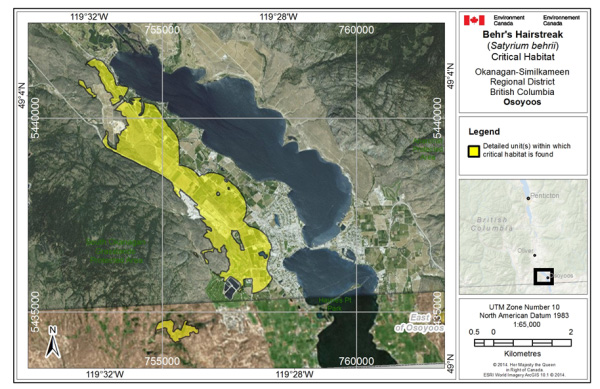 Map showing ritical habitat for Behr's Hairstreak at Osoyoos