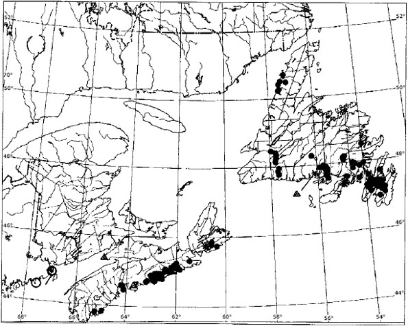 Figure 3: Overall distributional map for occurrences of Erioderma pedicellatum on balsam fir (Abies balsamea) in Atlantic Canada, based on observations made both before 1995 and after 1994.