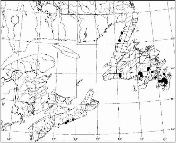 Figure 5: Distributional map for all of the occurrences of Erioderma pedicellatum in Atlantic Canada that have been based on confirmed observations made after 1994.