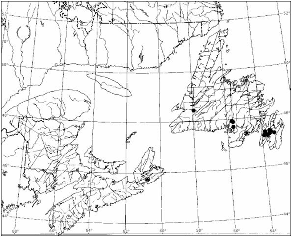 Figure 6: Distributional map for occurrences of Erioderma pedicellatum on spruce trees in Atlantic Canada: On Picea mariana (represented by solid dots) and on Picea glauca (represented by an asterisk).