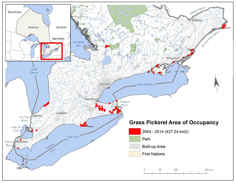 Map showing area of occupancy for the Grass Pickerel.