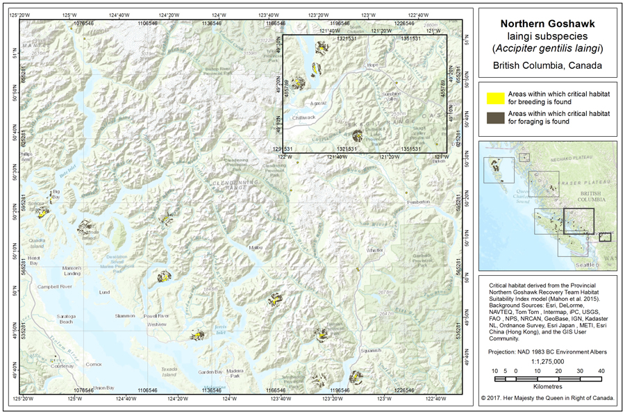 This diagram shows the location of critical habitat for Northern Goshawk, laingi subspecies in the South Coast and Vancouver Island Conservation Regions. Long description in table B1 below.