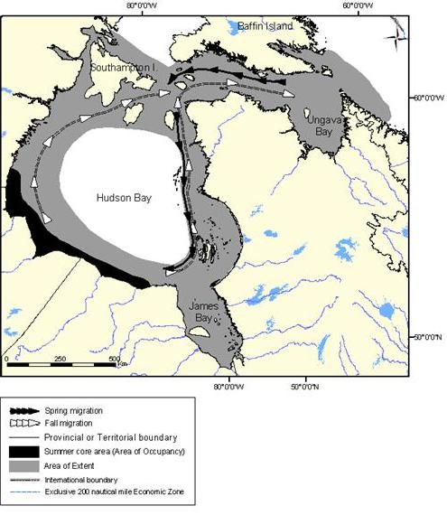 Figure 7: Extent of occurrence (area of extent) and summer core area of the Western Hudson Baypopulation of belugas.