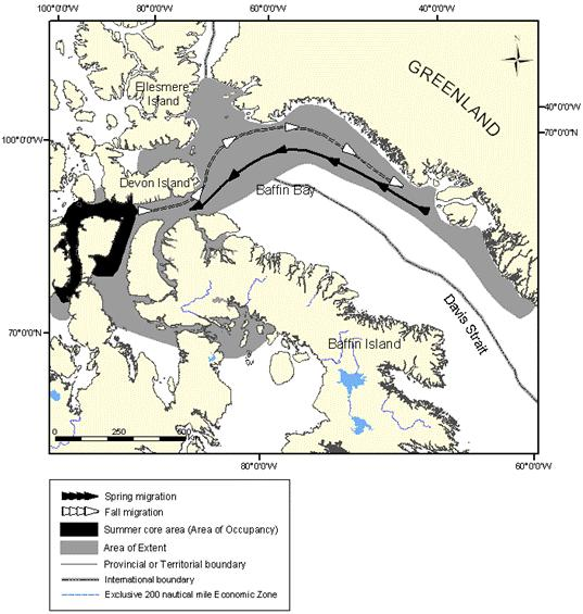 Figure 8: Extent of occurrence (area of extent) and summer core area of the Eastern High Arctic –Baffin Bay population of belugas.