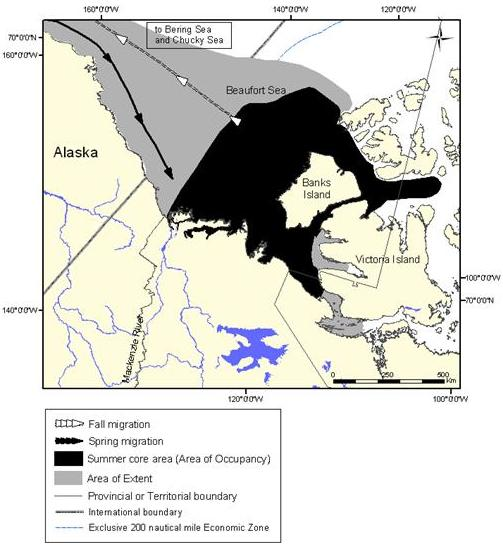 Figure 10: Extent of occurrence (area of extent) and summer core area of the Eastern Beaufort Sea population of belugas.