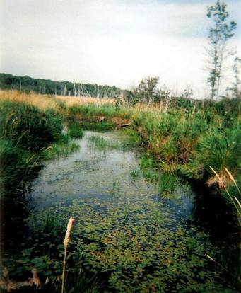 Figure 4. Habitat typique du potamot de Hill (photo de Kristina Makkay, site no 17).
