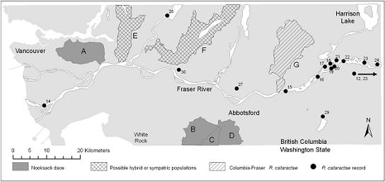 Figure 3: In Canada, Nooksack dace populations are confirmed in the Brunette River (A, 2004), Bertrand Creek (B, 2005), Pepin Creek (C, 2004), and Fishtrap Creek (D, 2004).