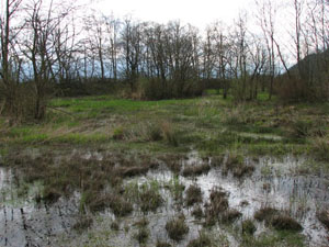 Figure 4. Typical oviposition habitat for Oregon Spotted Frog at Mountain Slough. Photo credit: K. Welstead.