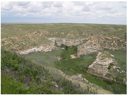 Photo of confirmed Weidemeyer's Admiral habitat at Police Coulee in Writing-on-Stone Provincial Park, Alberta. The photo has been taken from higher ground overlooking the habitat.
