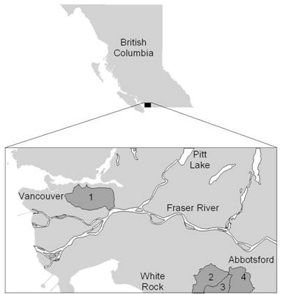 Canadian distribution of Nooksack dace : Brunette river, Bertrand creek, Pepin Brook and Fishtrap creek