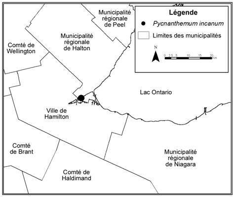 Figure 2. Aire de répartition de Pycnanthemum incanumau Canada.