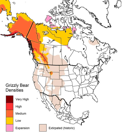 where do grizzly bears live map